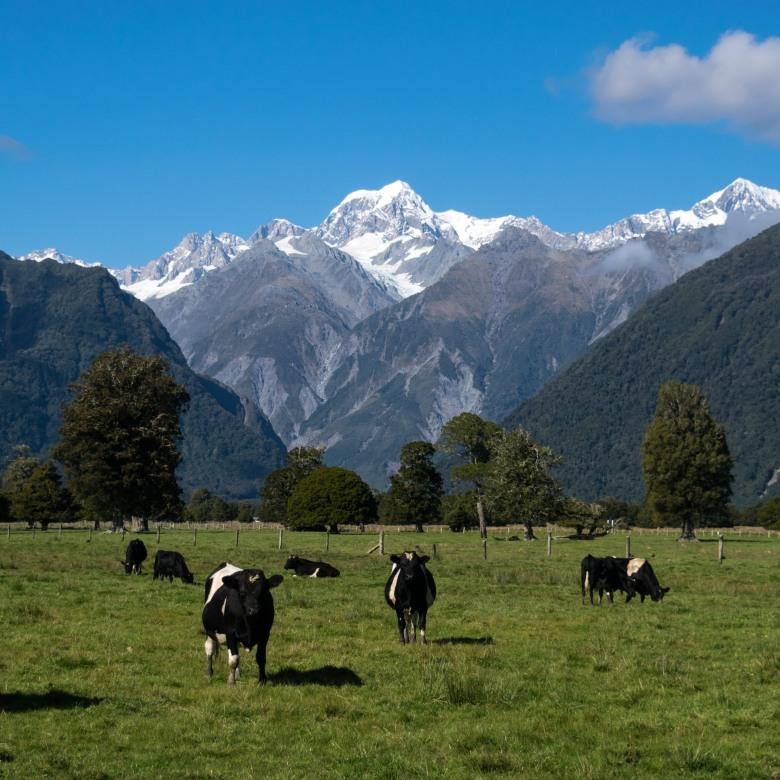Vert-Nouvelle-Zélande-Industrie-Laitiere-1