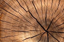 Le Tencell, fait à partir de fibres de bois